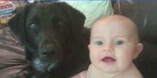 Ein Babysitter misshandelt den kleinen Jungen - doch der Familienhund weiß sich zu helfen
