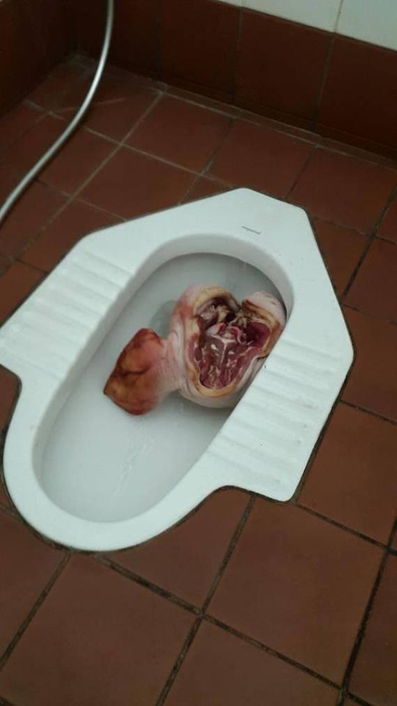 pig toilet uwa head university