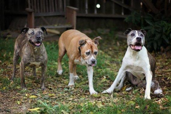cachorros resgatados