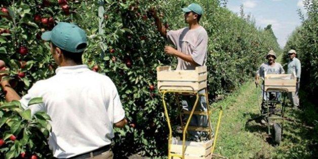 Les Emirats arabes unis investissent dans l'agriculture marocaine