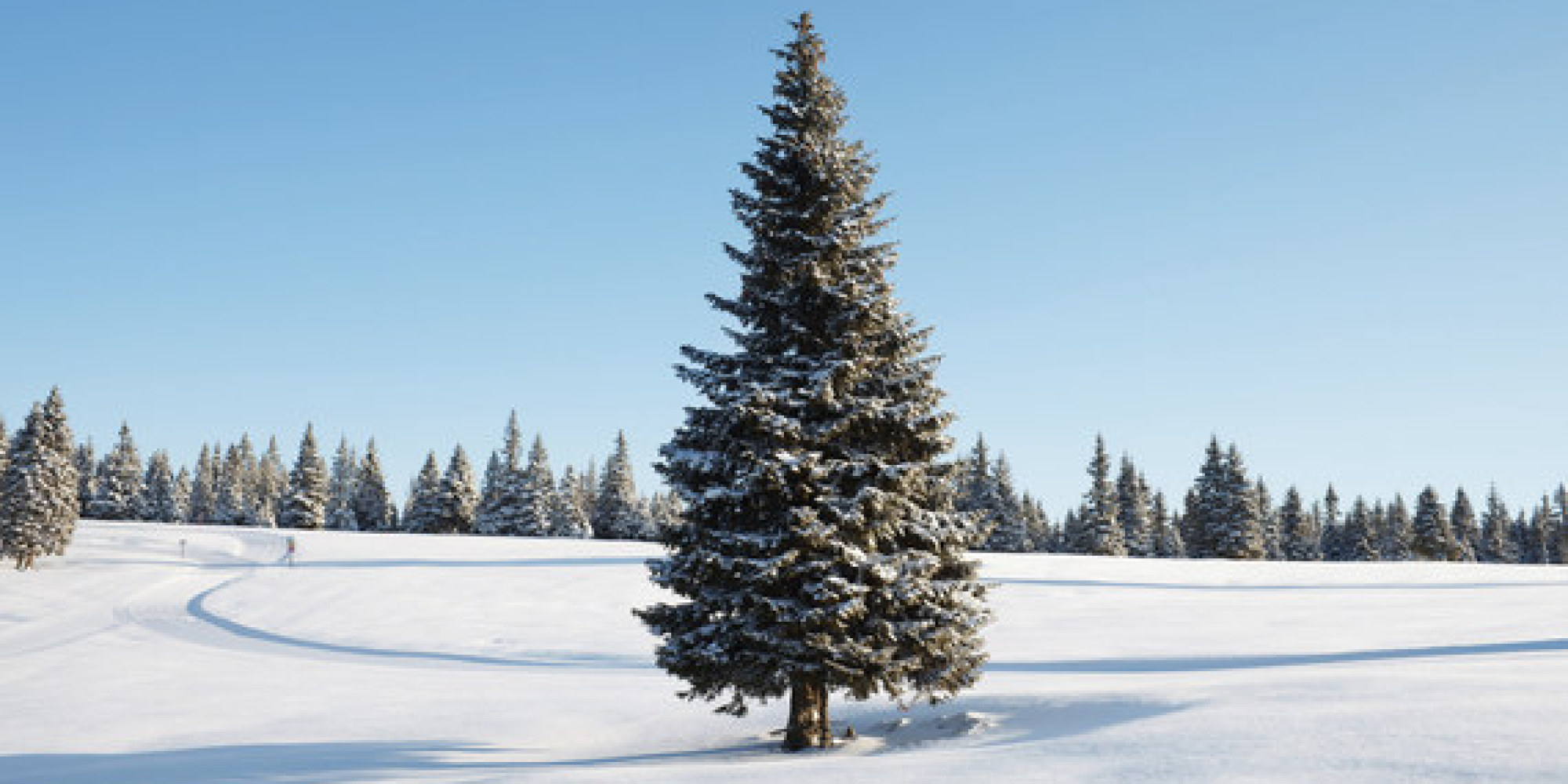 The 5 Top Christmas Tree Types (and Why They're the Best) | HuffPost