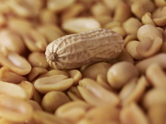 peanuts crispr allergy