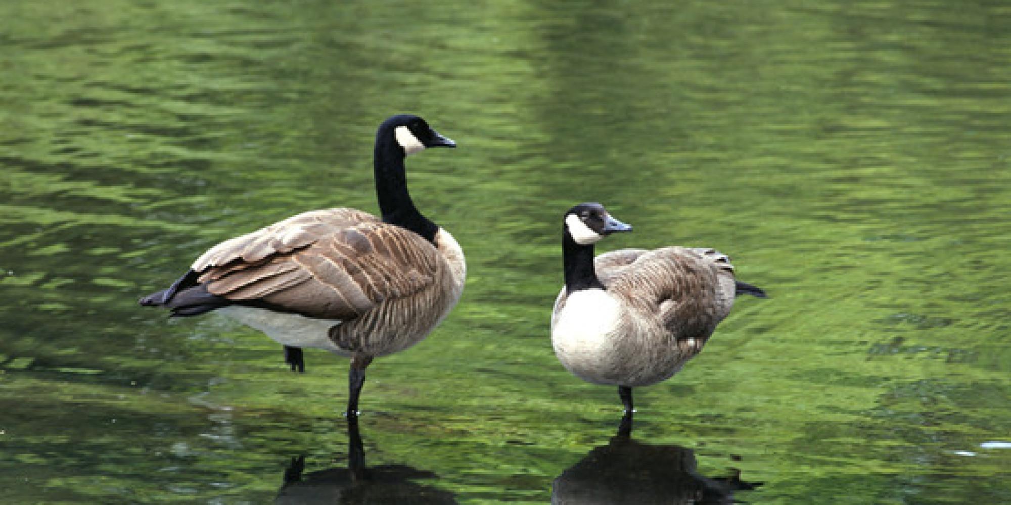 canada goose 10 fois sans frais
