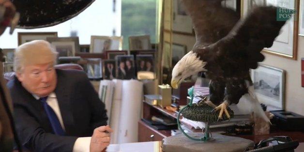 VIDÉO. Quand donald Trump se fait voler dans les plumes par un aigle, symbole des États-Unis