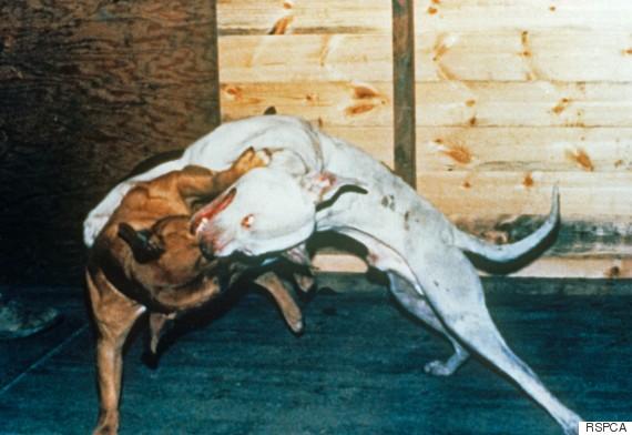 dogfighting