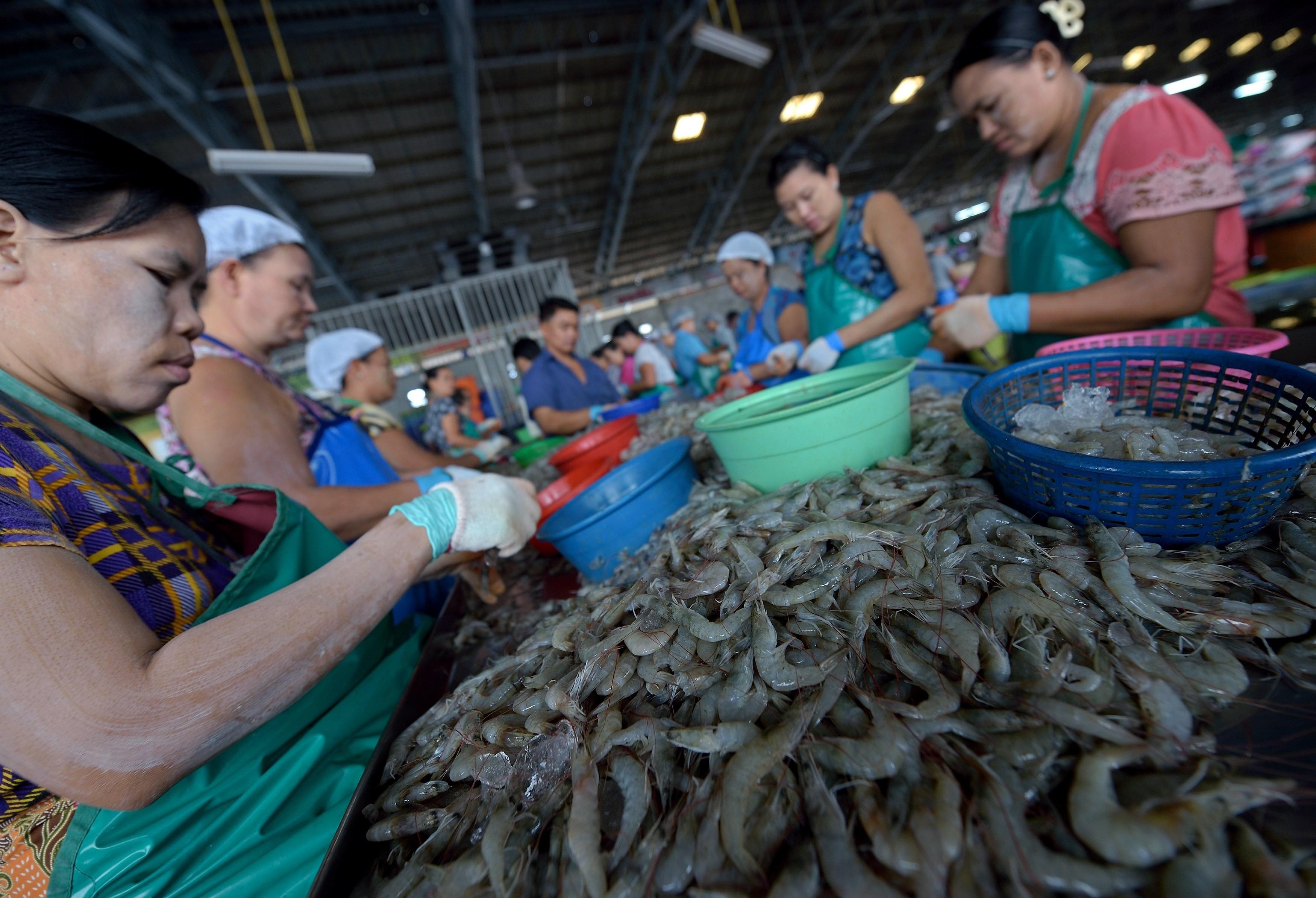 shrimp thailand