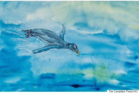 bird fossil vancouver island