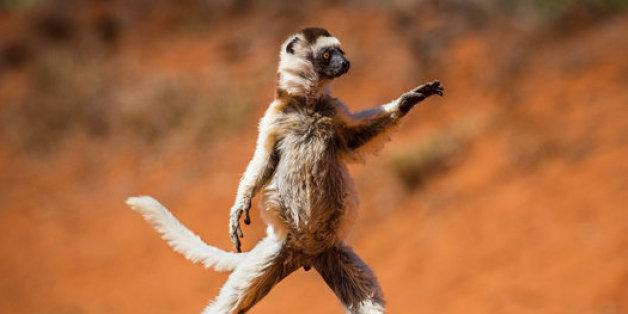 Le classement des photos d'animaux les plus drôles révélé