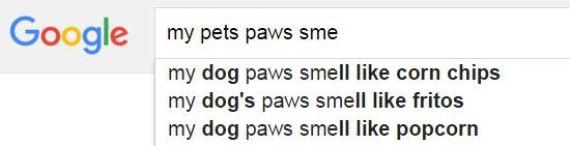 google pets paws