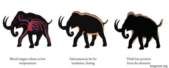 mammouth 2