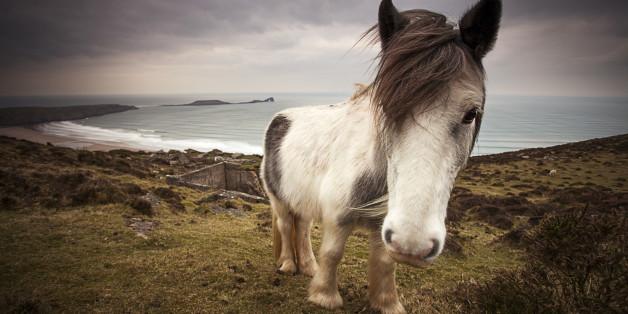 Ein Pony ist im Erzgebirge gestorben - Tierpark-Besucher hatten ihm Kohl zum Fressen gegeben (Symbolbild)