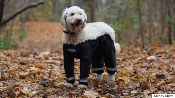 muddy mutts dog wearing trousers pants
