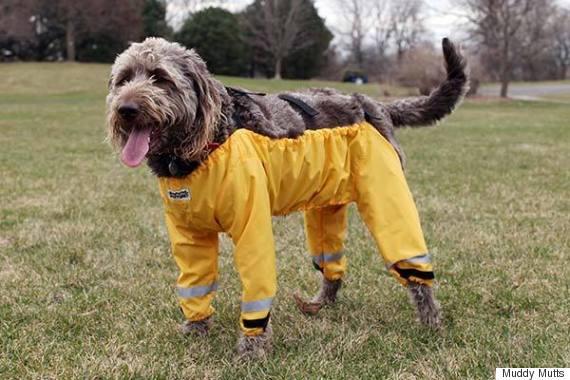 muddy mutts dog wearing pants trousers