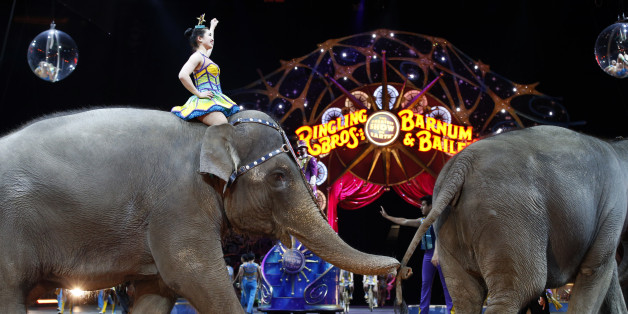 Elephants walk during a performance of the Ringling Bros. and Barnum & Bailey Circus, Thursday, March 19, 2015, in Washington. It was recently announced elephants would be eliminated from its circus performances by 2018. (AP Photo/Alex Brandon)