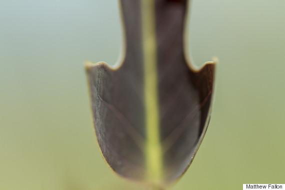 leaf national arboretum canberra