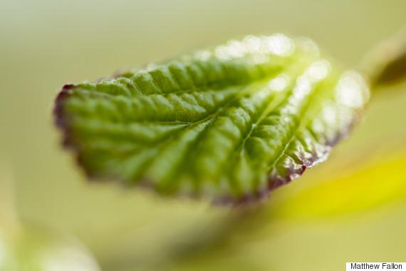 leaf macro national arboretum canberra
