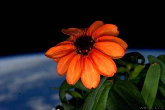 fiore spazio