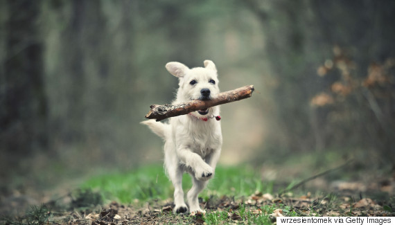 dog catching a stick