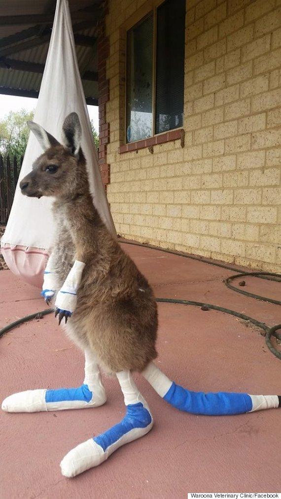 waroona veterinary clinic