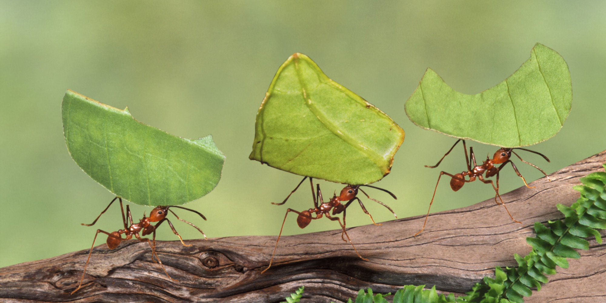 What Can We Learn From Ants? | Better Life Coaching Blog