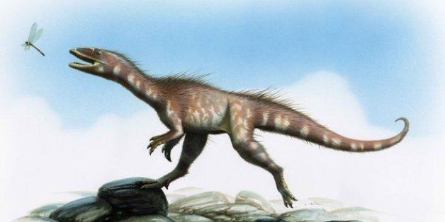 Un nouveau dinosaure, le dracoraptor, découvert au Pays de Galles