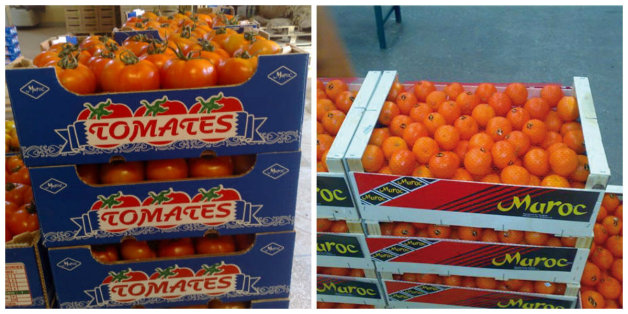 Les temps sont durs pour les tomates et les agrumes marocains
