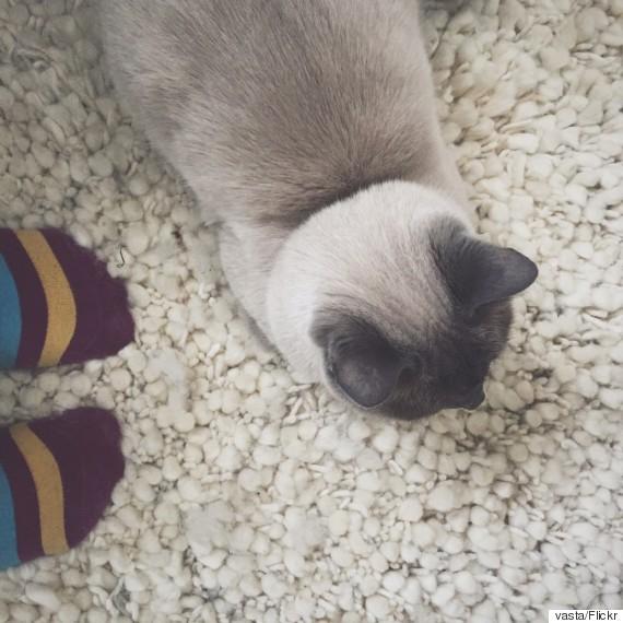 rug socks feet