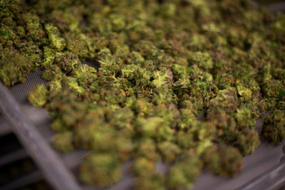 tweed marijuana inc