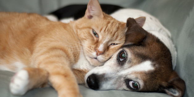 Cute dog with cat. Love. red and cute animals