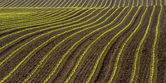La banque mondiale se penche sur le business de l'agriculture au Maroc