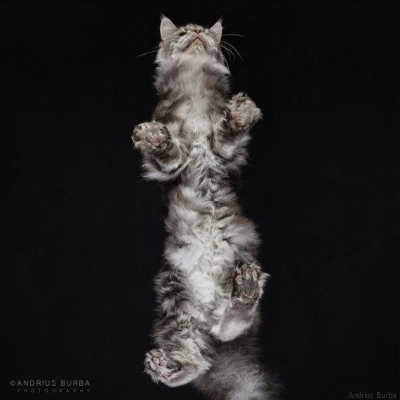 gatto 6