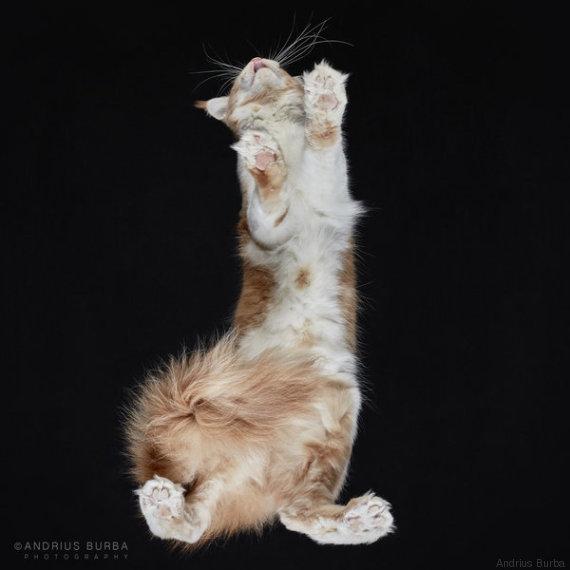 gatto 13