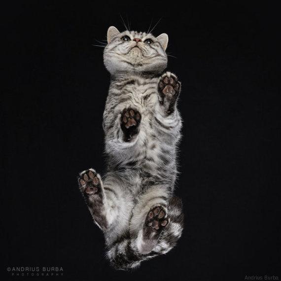 gatto 14