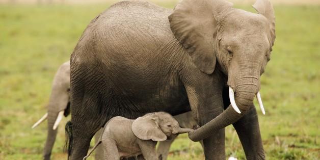 Elefanten im Amboseli National Park