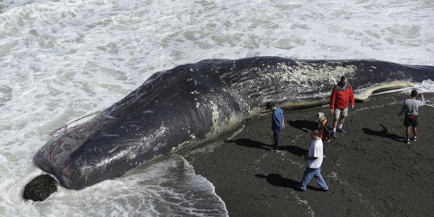 2015년 4월 15일, 미국 캘리포니아 해안에서 사람들이 죽은 고래를 보고 있다. (자료사진)