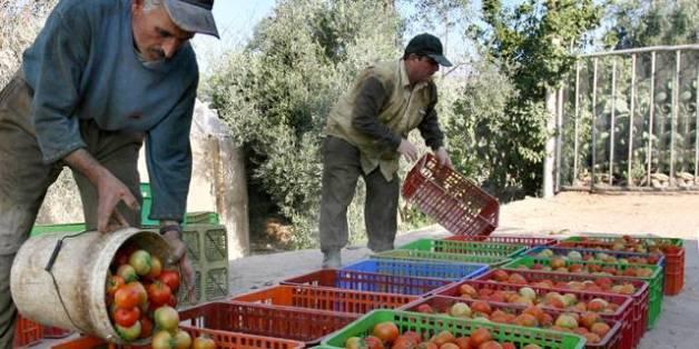 L'Union Européenne ne va pas revoir son accord avec le Maroc sur l'importation de tomates