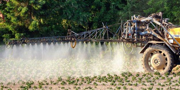Epandage de pesticides dans un champ de pommes de terre, à Godewaersvelde, dans le Nord de la France.