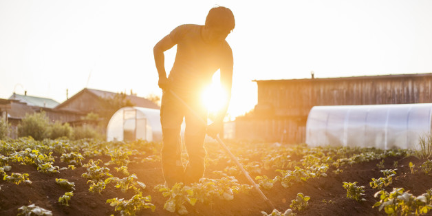 """Ein Bauer von """"Bauer sucht Frau"""" hat sich neu verliebt (Symbolbild)"""