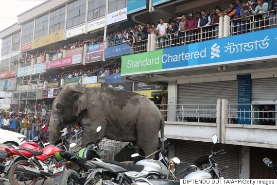 wild elephant on rampage