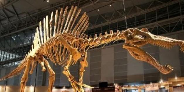 D'importants gisements de dinosaures découverts au Maroc