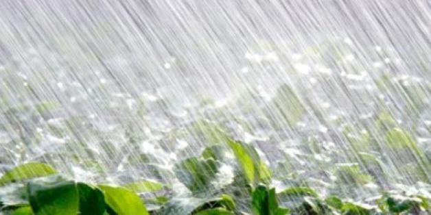 Les récentes pluies redonnent espoir aux agriculteurs marocains