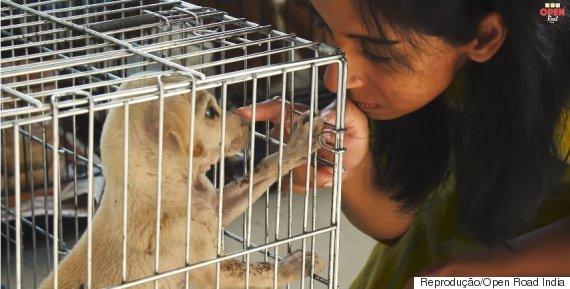 animais resgatados