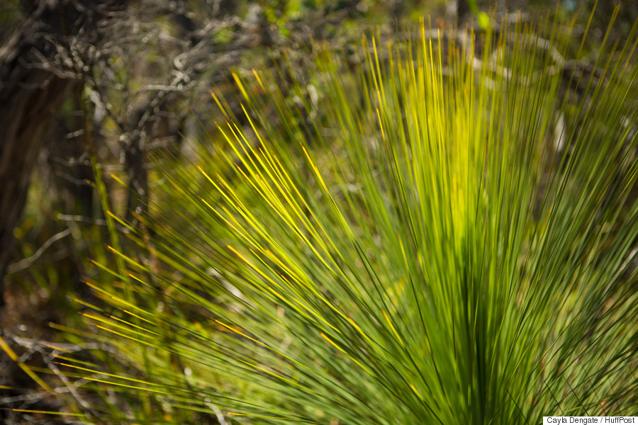 grass tree 12 apostles lodge walking tour blackbut