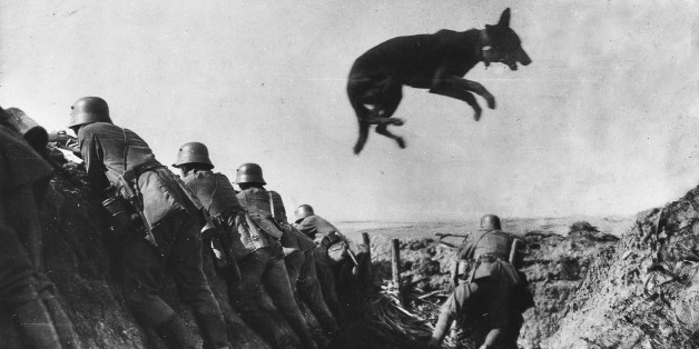 (GERMANY OUT) World War I. German school for messenger dogs in France. Dog jumping over a dugout. It is wearing a message around his neck. Summer 1917 (Photo by ullstein bild/ullstein bild via Getty Images)