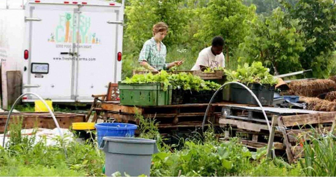 fresh city farms