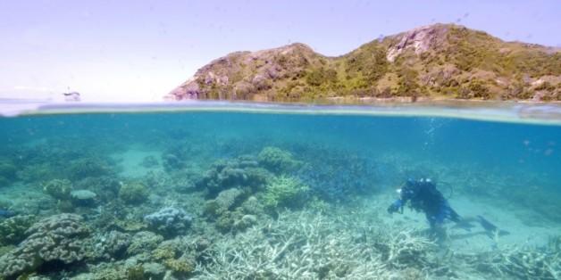 Photographie transmise par WWF le 1er mars 2016, montrant Lyle Vail, directeur de la station de recherche de Lizard Island en train d'examiner le blanchiment du corail au large du Queensland en Australie