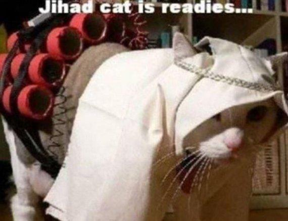 jihadi cat