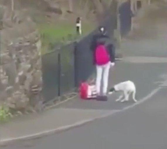 dog kicked