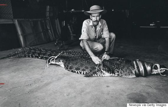 crocodile captured australia