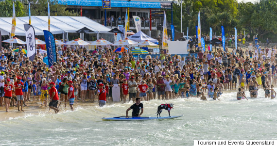 dog surfing noosa
